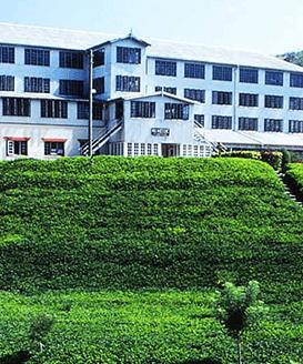 Tea Factory Visit